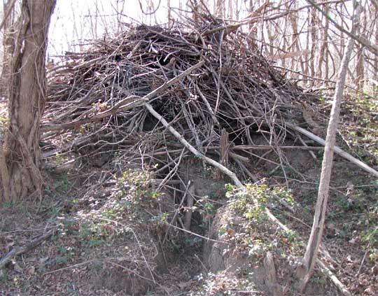 Beaver lodge diagram - photo#38